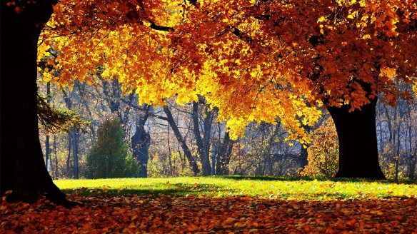 sunny-autumn-day-wide-wallpaper-35561