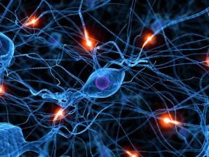 neuronsfiringbrocasarea